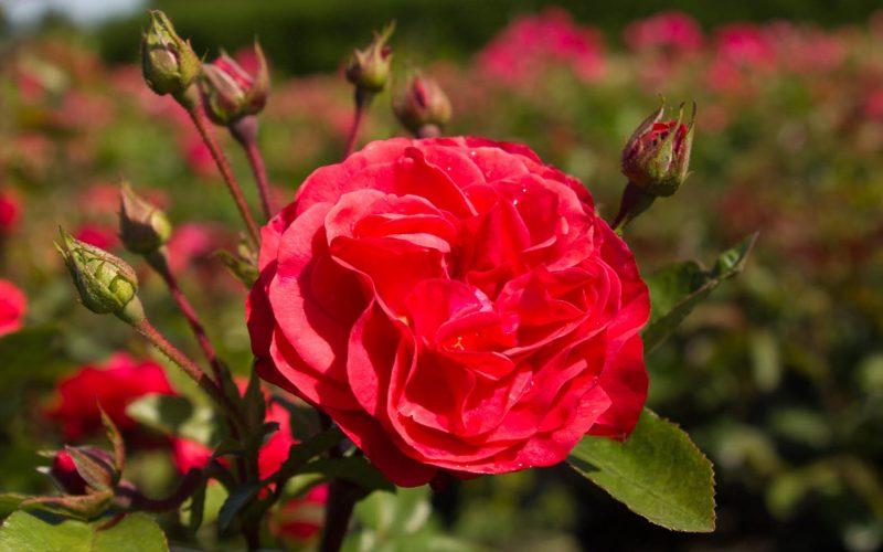 Prinses Mathilde | BEST-select