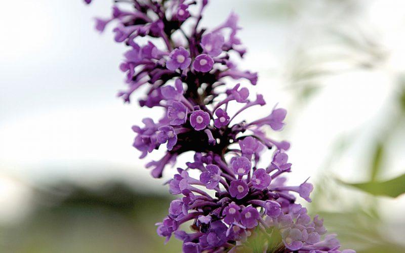 Plantenveredeling: hoe werkt het? | BEST-select